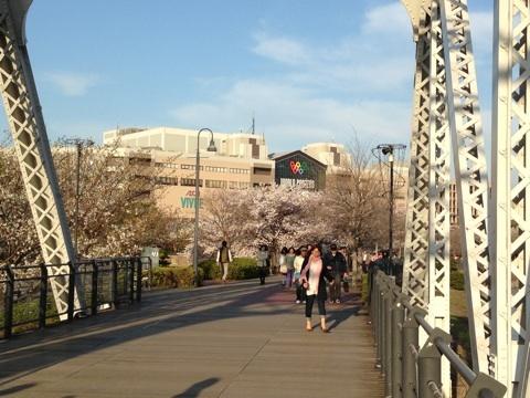 blog_import_5411522c725c1 横浜・汽車道の桜